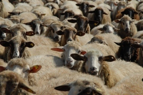 Bulgarian Breeders Will Receive BGN 82.5 Million In Support