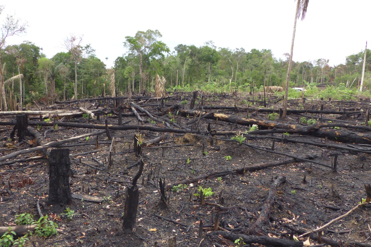 European Commission Asks About New Policies To Forestall Deforestation And Biodiversity Losses