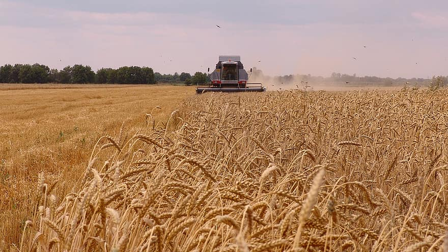 Bulgaria: Wheat Production Is Expected To Be 15% Higher This Year