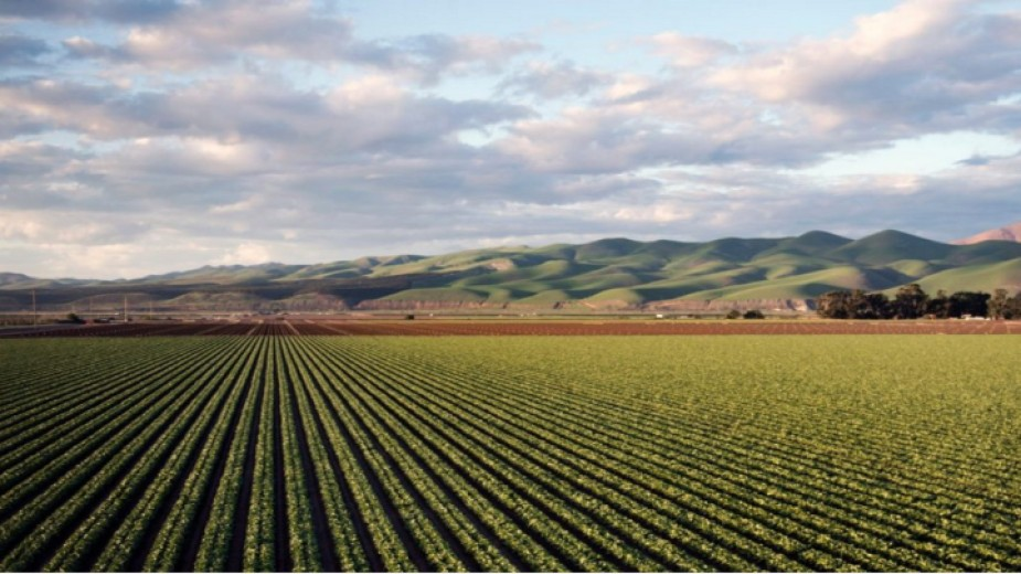 NSI: Economic Accounts For Agriculture For 2019