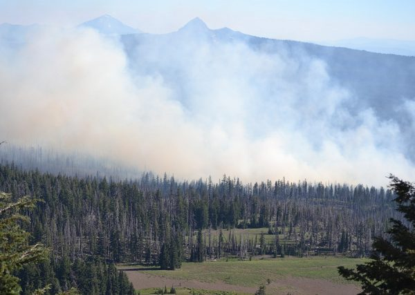 Wildfire In Rila Mountain Destroys 1.5 Hectares Of Pine Forest